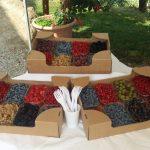 Degustazione prodotti biologici, Comunità MartaMaria